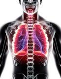 3D illustration av lungor, medicinskt begrepp stock illustrationer