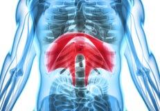 3D illustration av membranen, medicinskt begrepp vektor illustrationer