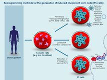 Methods for generation of induced pluripotent stem cells. 3d illustration of the basic methods to generate induced pluripotent stem cells Stock Image