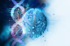 3d illustration of brain on dna molecules abstract technology stock illustration