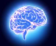 3D illustration of bright blue brain. Royalty Free Stock Photos