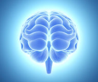3D illustration of bright blue brain. 3D illustration of bright blue brain, anatomy and medical concept Stock Photo