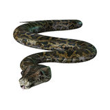 3D Illustration Burmese Python on White royalty free illustration