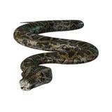 3D Illustration Burmese Python on White Stock Image