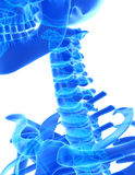 3D illustration of Cervical Spine, medical concept. Royalty Free Stock Photos