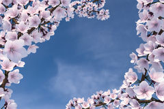 3D Illustration of Cherry Blossom Tree Stock Photos