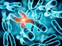 3d illustration of Chromosomes Stock Images