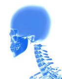 3D illustration of Cranium, medical concept. Stock Photography