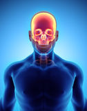 3D illustration of Cranium, medical concept. Royalty Free Stock Photos