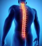 3D illustration d'épine, concept médical Photo libre de droits