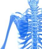 3D illustration d'omoplate, concept médical Images stock