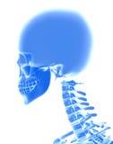 3D illustration de crâne, concept médical Photographie stock