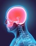 3D illustration de crâne, concept médical Photographie stock libre de droits