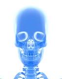 3D illustration de crâne, concept médical Photos libres de droits