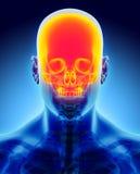 3D illustration de crâne, concept médical Image libre de droits