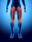 3D illustration de fémur, concept médical Images stock