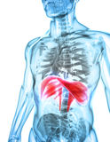 3D Illustration der Membran, medizinisches Konzept Lizenzfreies Stockfoto