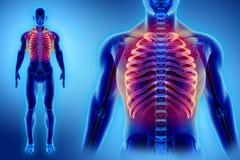 3D illustration des nervures, concept médical Photographie stock libre de droits