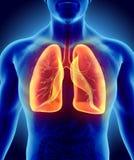 3D illustration des poumons, concept médical Photo stock