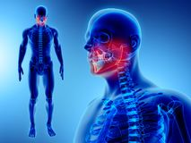 3D Illustration des Unterkiefers, medizinisches Konzept stock abbildung