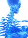 3D Illustration des zervikalen Dorns, medizinisches Konzept lizenzfreie abbildung