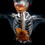 3d illustration of digestive system, x ray stock image