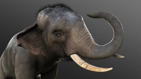 3d Illustration elephant isolate on black background. Elephant in dark with clipping path Stock Photography
