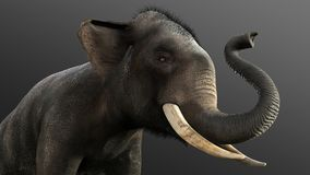3d Illustration elephant isolate on black background. Elephant in dark with clipping path Stock Photos