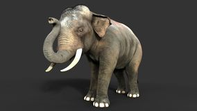 3d Illustration elephant isolate on black background. Elephant in dark with clipping path Stock Images