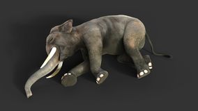 3d Illustration elephant isolate on black background. Elephant in dark with clipping path Royalty Free Stock Images