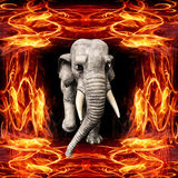 3D illustration of the elephant running out of the flame. Salvation of nature and living beings. The concept of ecological safety of the planet Stock Images