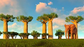 3d illustration of the elephant walking near baobab trees. 3d illustration of the elephant walking near baobabs Royalty Free Stock Photos