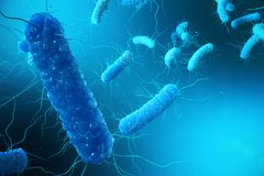 3D illustration Enterobacterias Gramnegativas Proteobacteria, bakterier liksom salmonellan, Escherichia Coli, yersinia royaltyfri illustrationer