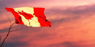 3d illustration of the flag. Of canada Stock Image