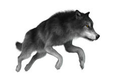 3D Illustration Gray Wolf auf Weiß Stockfoto