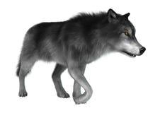 3D Illustration Gray Wolf auf Weiß stock abbildung