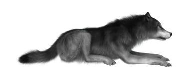 3D Illustration Gray Wolf auf Weiß vektor abbildung