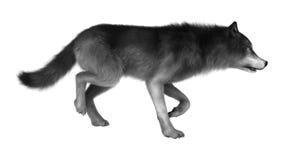 3D illustration Gray Wolf sur le blanc illustration de vecteur