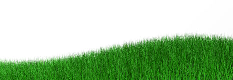 3d illustration green grass. Isolated on white Stock Photography