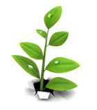 Grow through. 3d illustration of green herb growing through white background Royalty Free Stock Images