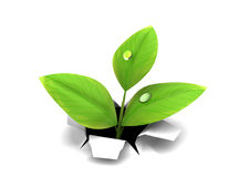 Growing thorugh paper. 3d illustration of green plant growing through paper or white background Royalty Free Stock Images