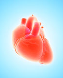 3D illustration of Heart, medical concept. 3D illustration of Heart - Part of Human Organic Royalty Free Stock Photography