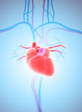 3D illustration of Heart, medical concept. Royalty Free Stock Photo