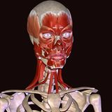 3d illustration human body face. The face is a central body region of sense and is also very central in the expression of emotion among humans and among numerous Stock Images