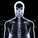 3d illustration of human body skeleton anatomy Royalty Free Stock Photo