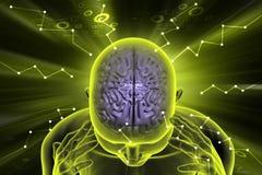 Human brain development concept. 3d illustration of human brain development concept Stock Image