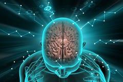 Human brain development concept. 3d illustration of human brain development concept Royalty Free Stock Photography