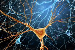 3D Illustration of Human Brain Neurons structure. A high resolution Royalty Free Stock Photography