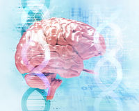 3d illustration of human head on dna molecules  abstract  Stock Photo