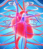 3D illustration of Human Internal System - Circulatory System. Human Internal System - Circulatory System medical concept - 3D illustration Stock Photo